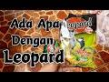 Sirtu Gacor Pake Voer Apa Sck Sadulur Cipoh Karawang  Mp3 - Mp4 Download