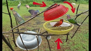 """Đẳng Cấp Bẫy Chim Cu Gáy Là Đây .Bẫy Chim Cu Cườm Bằng """"2 Cái Rỗ"""" .How To Make A Bird Trap thumbnail"""