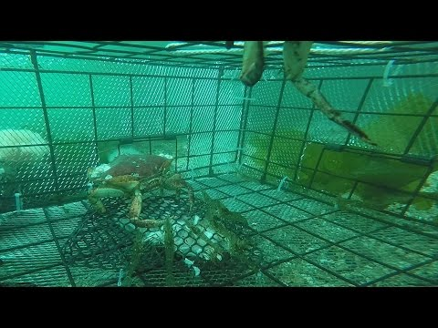 Catching Shrimp - Filmed by GoPro