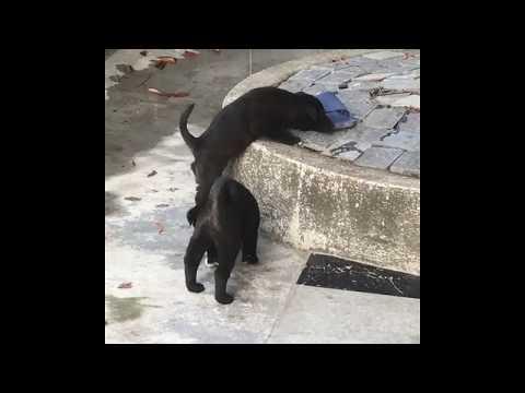Cute Pups~