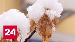 Холодов не будет до марта: потепление набирает обороты - Россия 24