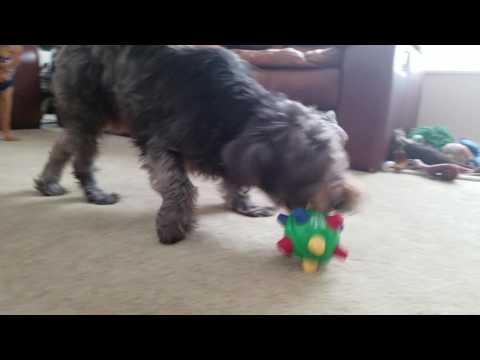 Dog Hates Ball