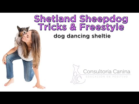 Dog Dancing Sheltie - Shetland Sheepdog Tricks & Freestyle