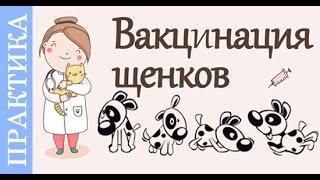 Прививки щенкам, как делают прививки щенкам и собакам. Советы_ветеринара