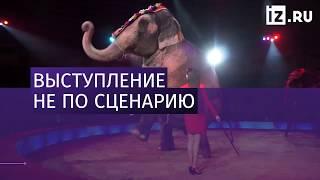 Слоны подрались во время выступления в цирке (2018)