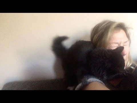 Joey Brooks - Kitty Does Not Appreciate Her Human's Singing