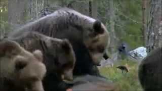 Жизнь животных в естественной среде