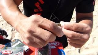 PESCA SURFCASTING HUMBERTO GACIO DAIWA-HAYABUSA TUTORIAL DE CEBOS: EL CANGREJO VERDE
