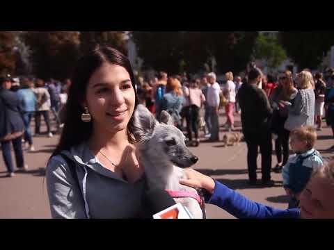 Телеканал Ексклюзив: Хмельницький долучився до Всеукраїнського маршу за тварин