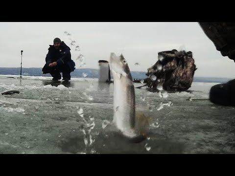 САМОДУРЫ РАБОТАЮТ! РЫБЫ В ЯМЕ КИШИТ! Зубатка Селедка СНОСЯТ удочки. Рыбалка зимой!