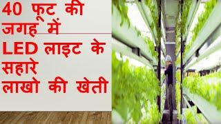 Vegetables growing in container कन्टेनर में सब्जियों की खेती