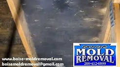 Boise Mold Removal uses a top of the line mold remediation chemical cleaning agent.