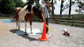 Painting Pony Presents: The Trick Ponies Of Chincoteague