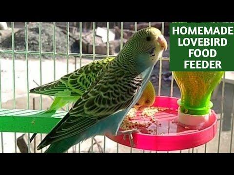 LOVEBIRD AUTOMATIC FOOD