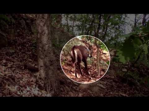 Natural Monument Gorals