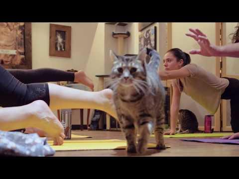 Yoga chat au Chat l'Heureux Montréal - Cat Yoga