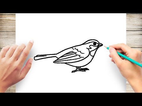 How To Draw Wrens Bird