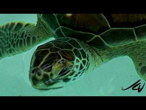 bonefish,-stingray's-and-turtles-tropical-aquarium