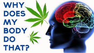 What Does Marijuana Do To Your Body And Mind?