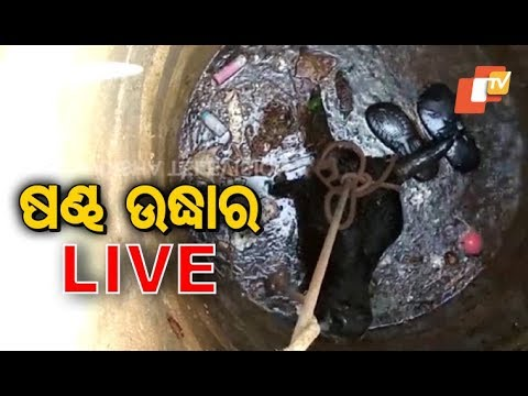 Ox Slips Into Well, Rescued In Cuttack