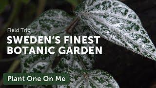 Botanical Tour at the Gothenburg Botanical Gardens — Ep. 185