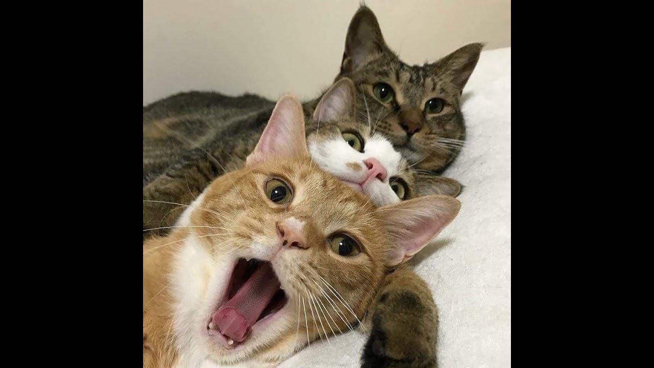 Cute Cat Healing Video 治愈系猫咪