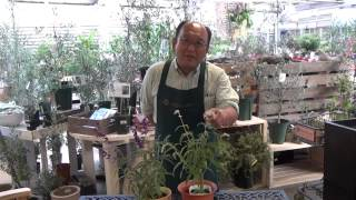 プロトリーフチャンネル プロトリーフ直営の園芸をたのしむオンラインシ...