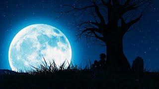 Deep Calming Sleep Music ▶ 528Hz Raise Your Vibrations While Sleeping | Have A Calm & Good Night