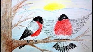 Как нарисовать снегирей - уроки рисования для малышей от Варвары Зуевой(Поэтапное рисование цветными карандашами., 2015-01-17T00:43:44.000Z)