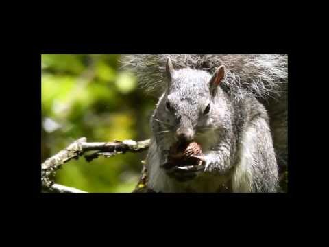 Squirrel Video for Kids w/ Fun Music