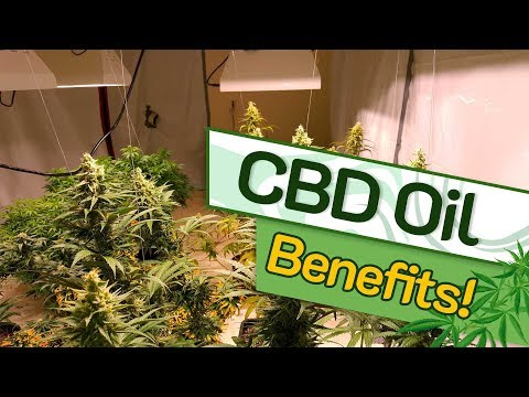 cbd-benefits---what-is-cbd-oil?-the-uses,-benefits-and-risks?