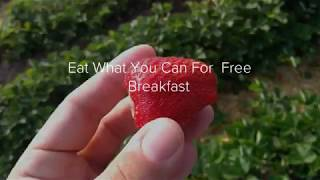 Eat All You Can For Free Breakfast