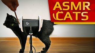 ASMR CATS - Purrific Rescue! (Relaxing ASMR video for Cat lovers) 4K binaural