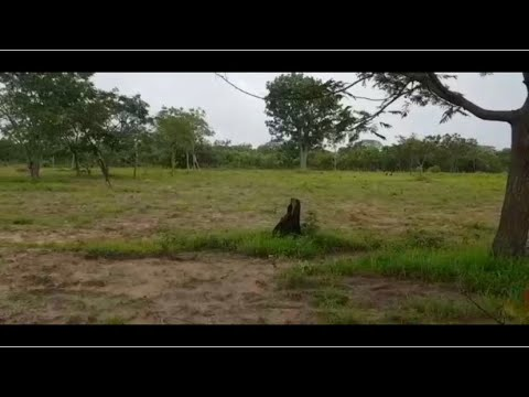 Buying a Land in The Gambia   Finally I have an other land which is 60 by 100m