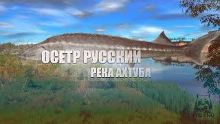 Русская Рыбалка 4 Russian Fishing 4 Река Ахтуба Осетр Русский