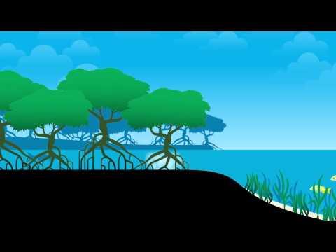 UQx Tropic101x Parrotfish Lifecycle Animation