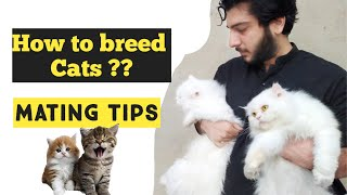Cat Mating Tips | How to breed Cats | Why Cat Refuses to breed