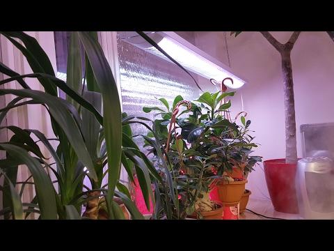 Освещение для растений. Итоги зимы