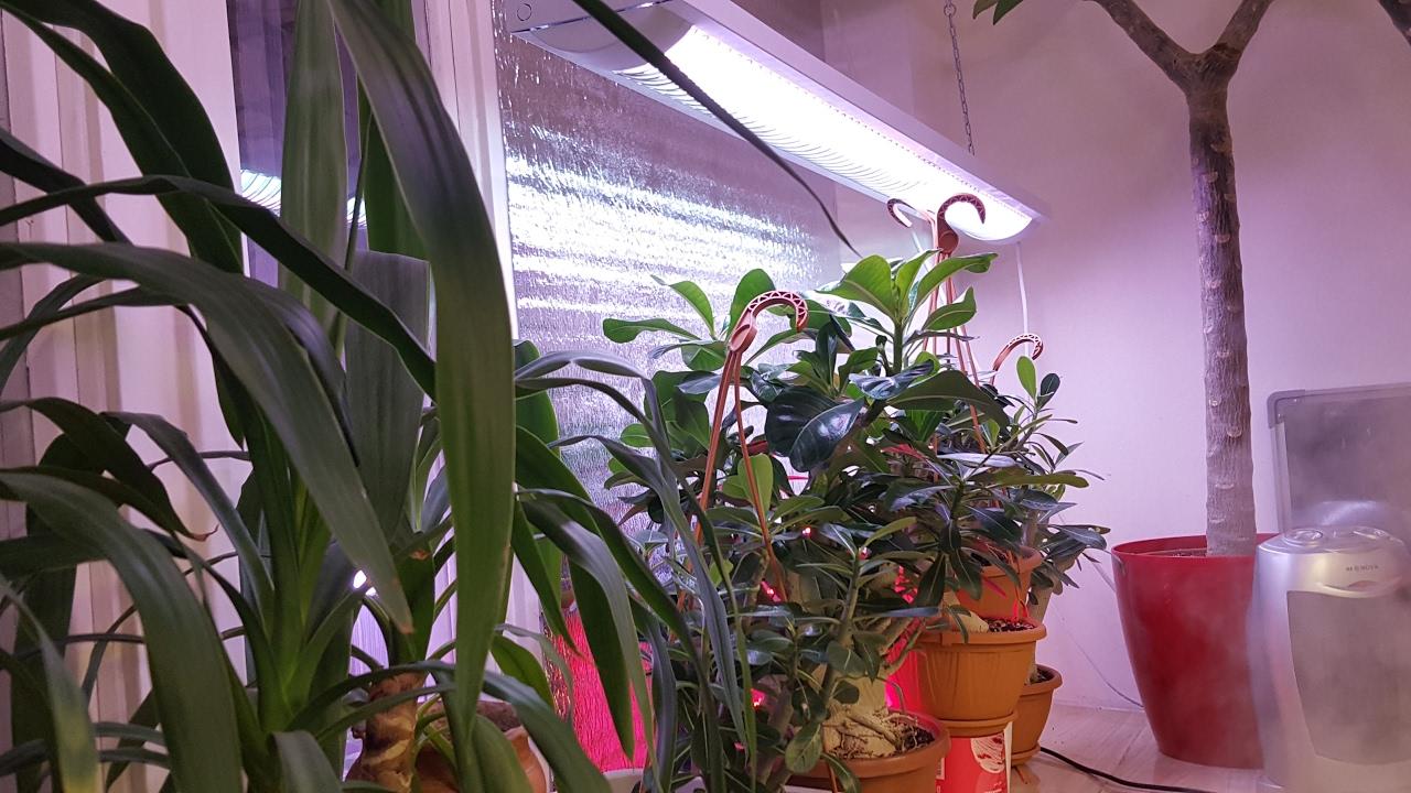 Как сделать подсветку для растений? - YouTube