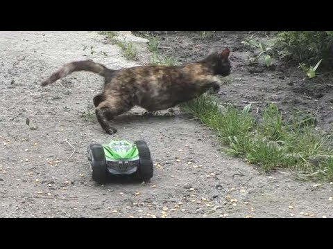 Toy RC Car and Scared Cats