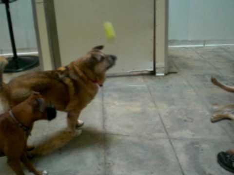 Big Sur playing ball at TDH