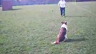 Obedience Training Sendaway (uk Style) Early Stages