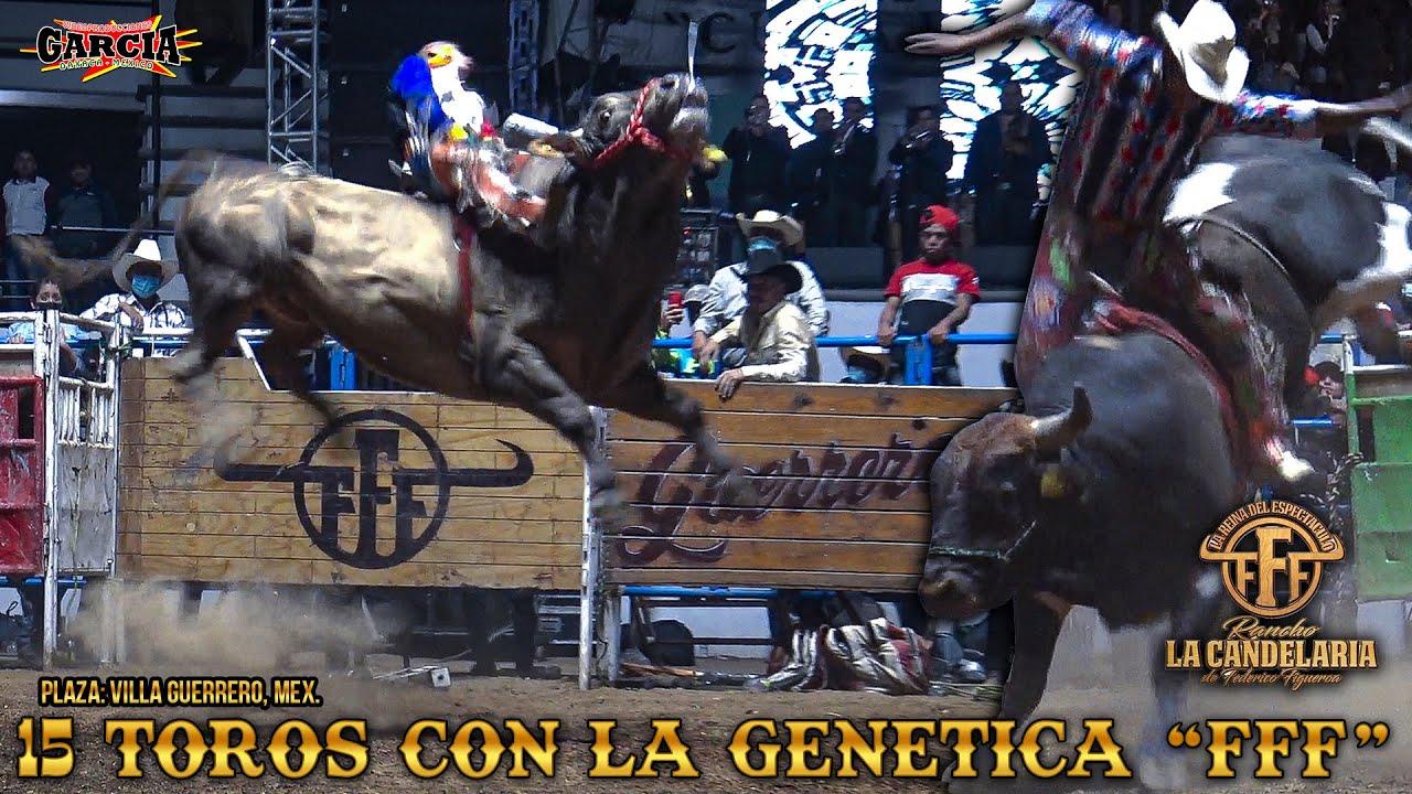 Download ¡LA FUERZA DE LA GENÉTICA FFF ES SENSACIONAL! 15 TOROS DE LA CANDELARIA EN VILLA GUERRERO, MEX. 2021