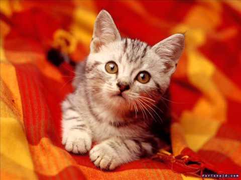 Cute Kitty Wallpapers Download صوت القطة Cat Voice Youtube