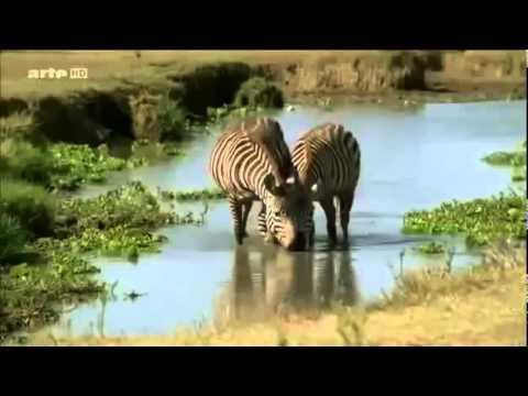 3gp documentaire animalier