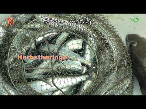 Hering: Angeln im Herbst vom Kleinboot
