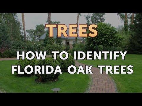 How To Identify Florida Oak Trees