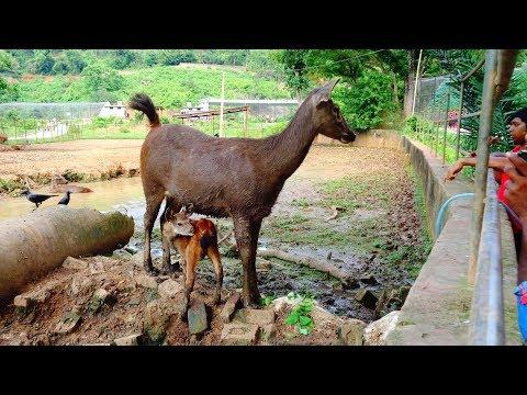 Assam State Zoo Cum Botanical Garden | Wildlife in HD | 720p | 28/05/2017