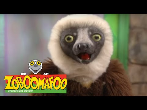 Zoboomafoo 203 - Talk to Me (Full Episode)