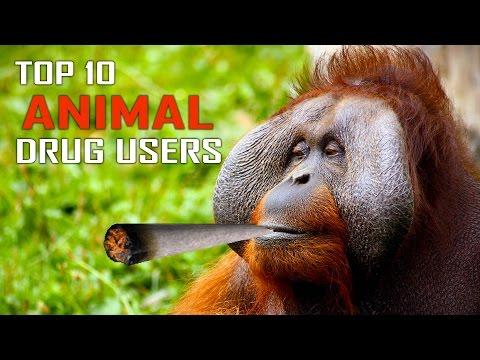 Top 10 Animal Drug Users